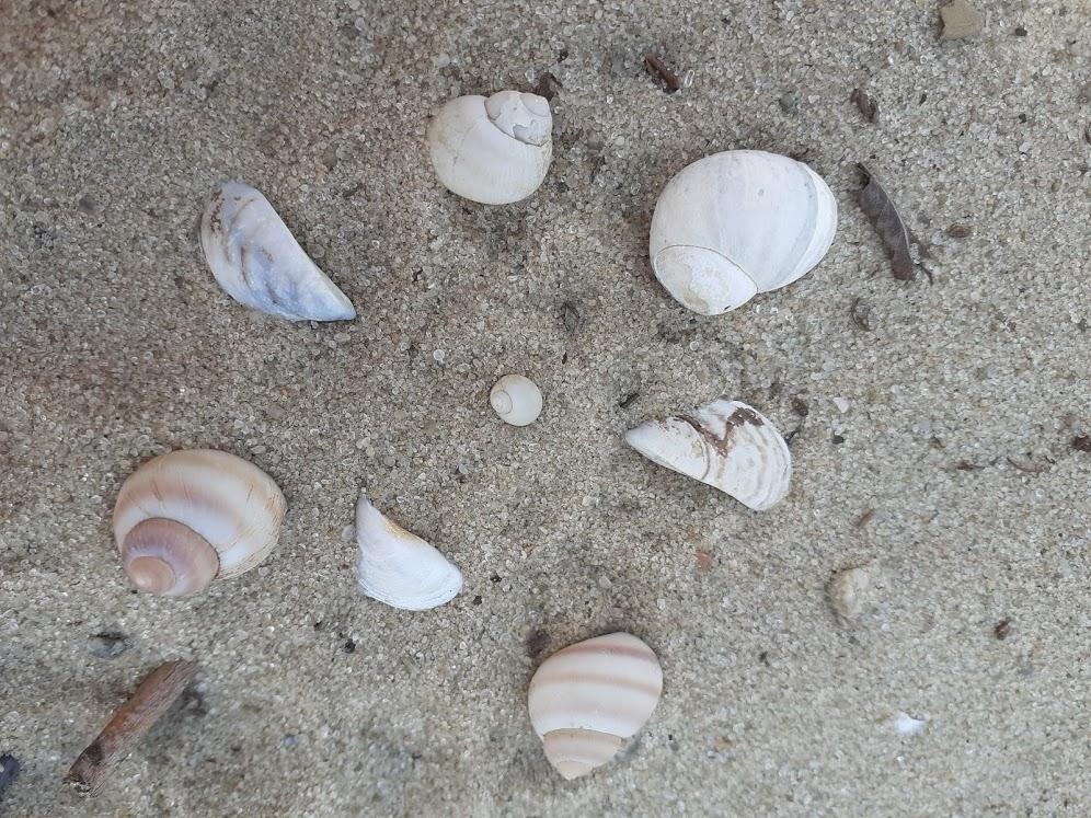 Ракушки и песчинки